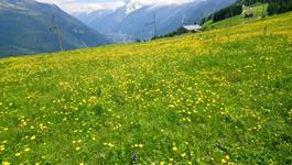 séjour linguistique anglais dans les Alpes