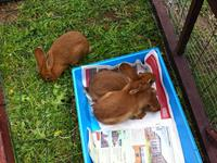 construction clapier à lapin en séjour linguistique